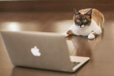 WordPressが利用できる無料レンタルサーバー比較!広告なしや独自ドメインが可能なサーバーもご紹介